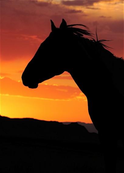 Wild Mustang Utah 2011