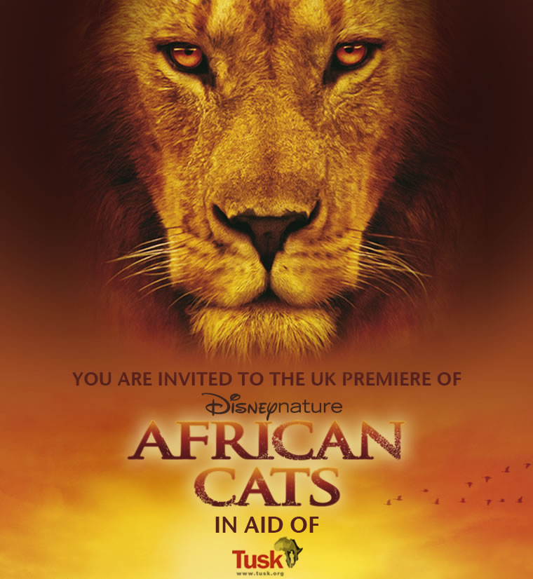 African Cats & Planet Earth Live - lions galore