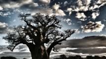 Zimbabwe, trees.