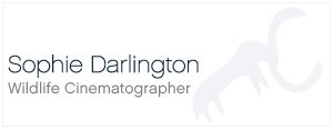 Sophie Darlington Logo